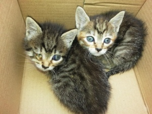 Gatos de acogida
