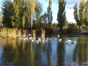 Laguna de la Dehesa de Cobeña